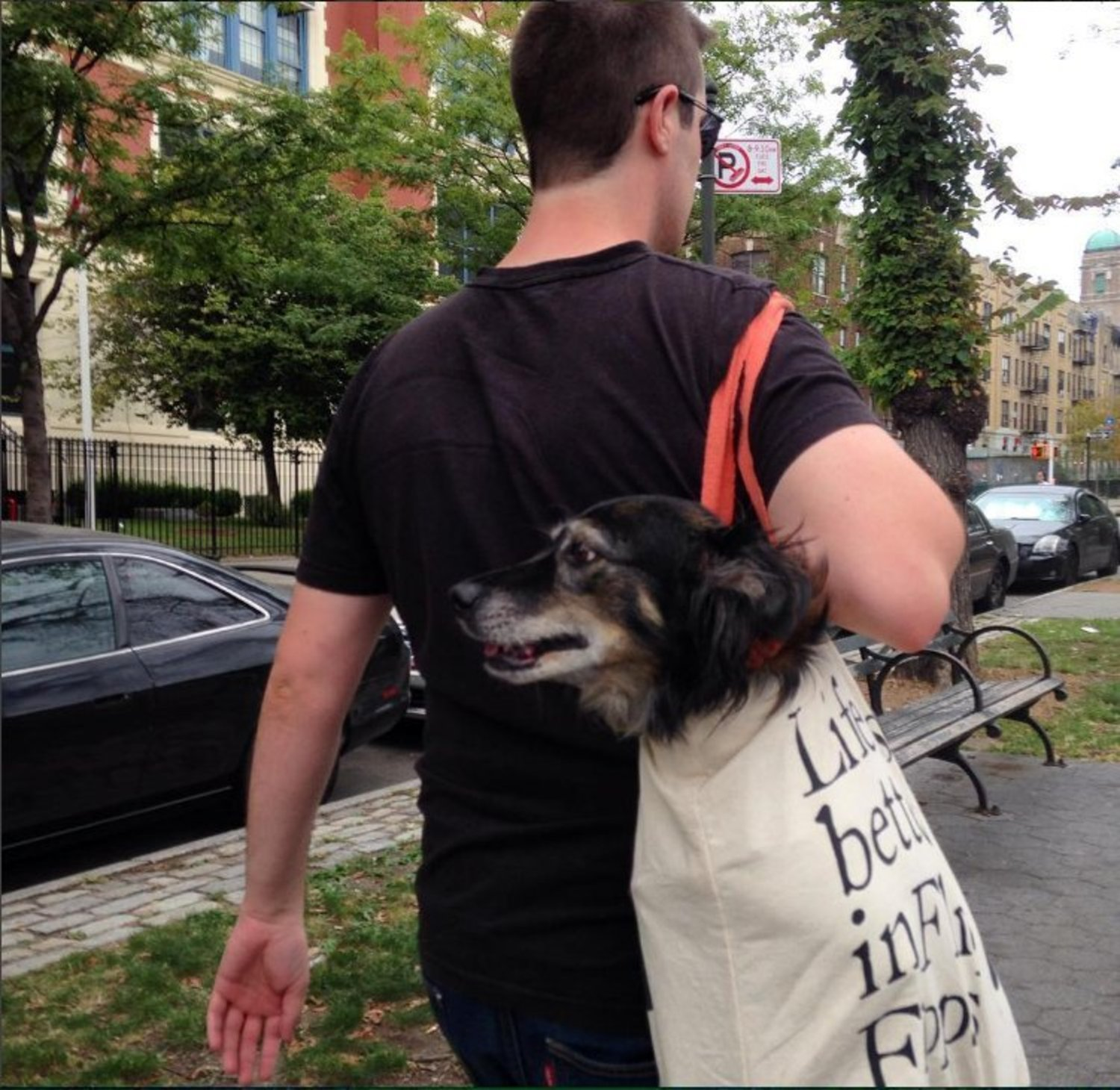 @alexromano @ttayl0r @Gothamist lol totally done this with my dog on the subway. https://t.co/sXfJEGBDDd