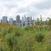 Brooklyn Bridge Park's flower garden at Pier 6 is in bloom for the first time.