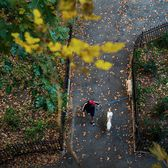 Vera Torres, a dog walker with Manhattan Paws Walkers, strolled through Riverside Park in Manhattan earlier today. The @nytimes staff photographer @heislerphoto, who was in Harlem on #nytassignment, headed to the park to capture New Yorkers embracing an unseasonably warm November day. #nytfoliage #🍂