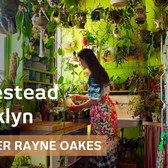 Homestead Brooklyn: model creates urban forest in her NYC flat