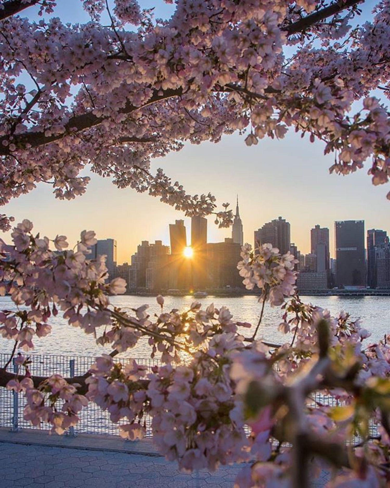 New York, New York. Photo via @maximusupinnyc #viewingnyc #newyork #newyorkcity #nyc