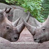 WCS Run for the Wild 2020 | Bronx Zoo