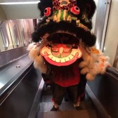 NYC Live Chinese Lion Dancing in Chinatown, Manhattan (Super Saturday) | February 8, 2020