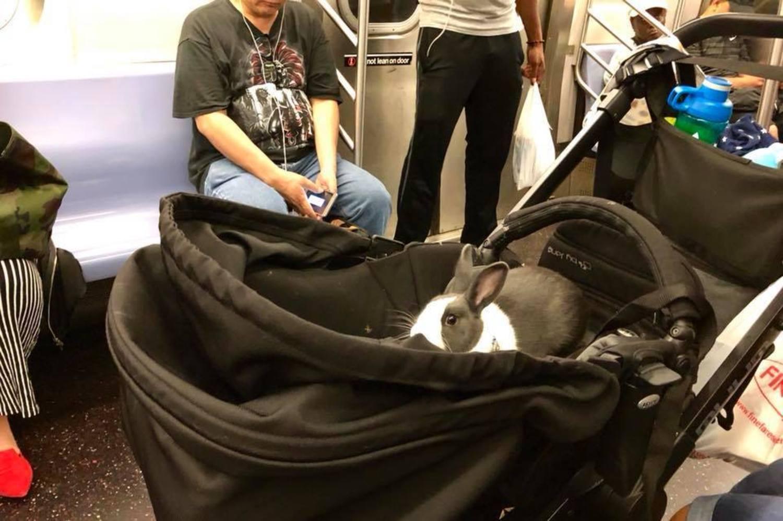 On the C train tonight, heading uptown...