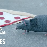 Meet the Rebels against New York's War on Rats | Going In with Brian Vines