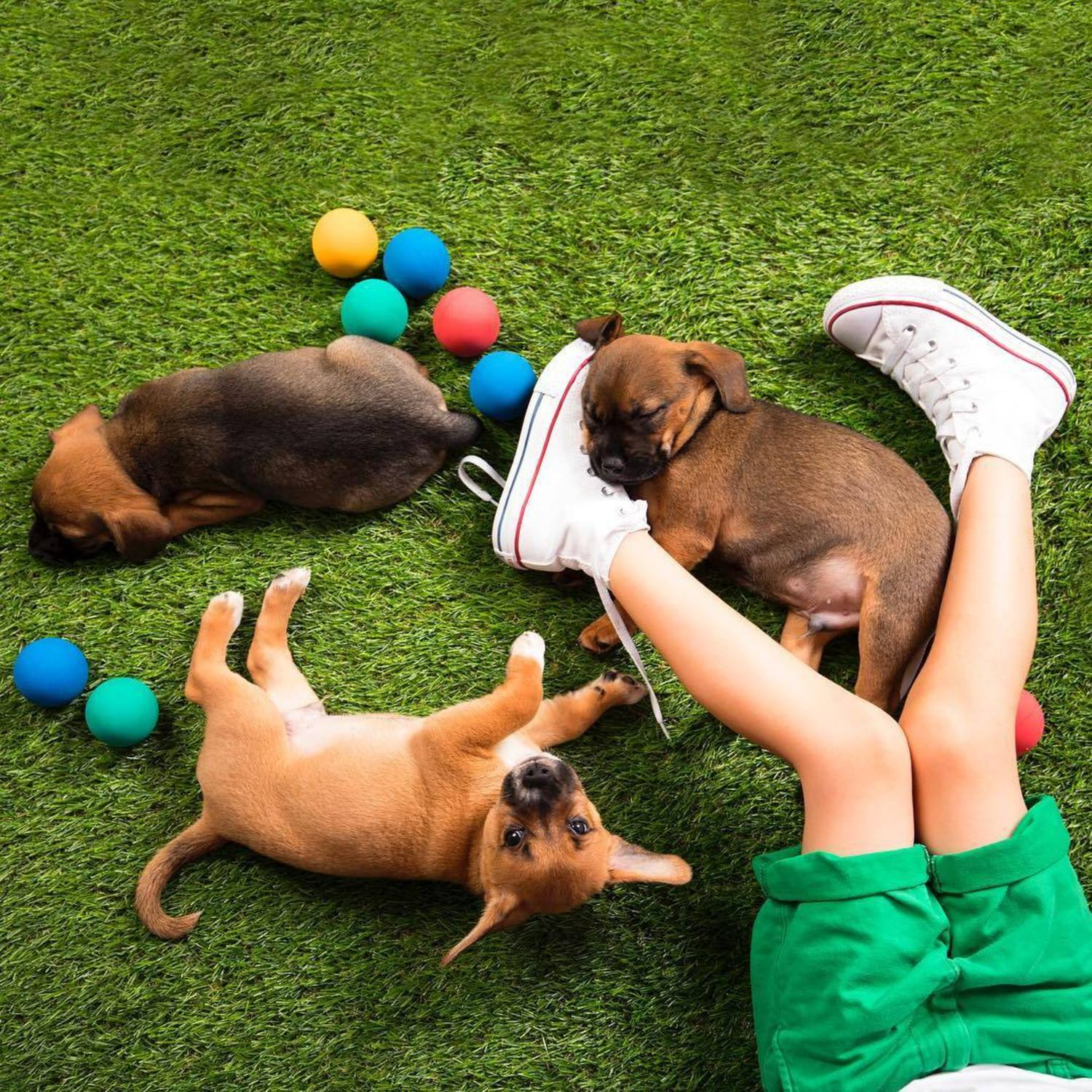 "Our tails are wagging with this sneak peek look at ""The Backyard"", one of the 8 immersive environments to enjoy at @humansbf ✨ Come play in the grass with me and some pups! 📸: Beagle Puppies from @rescuecity #humansbf"