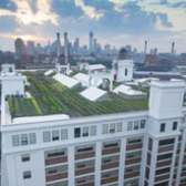 Brooklyn Grange - A New York Growing Season