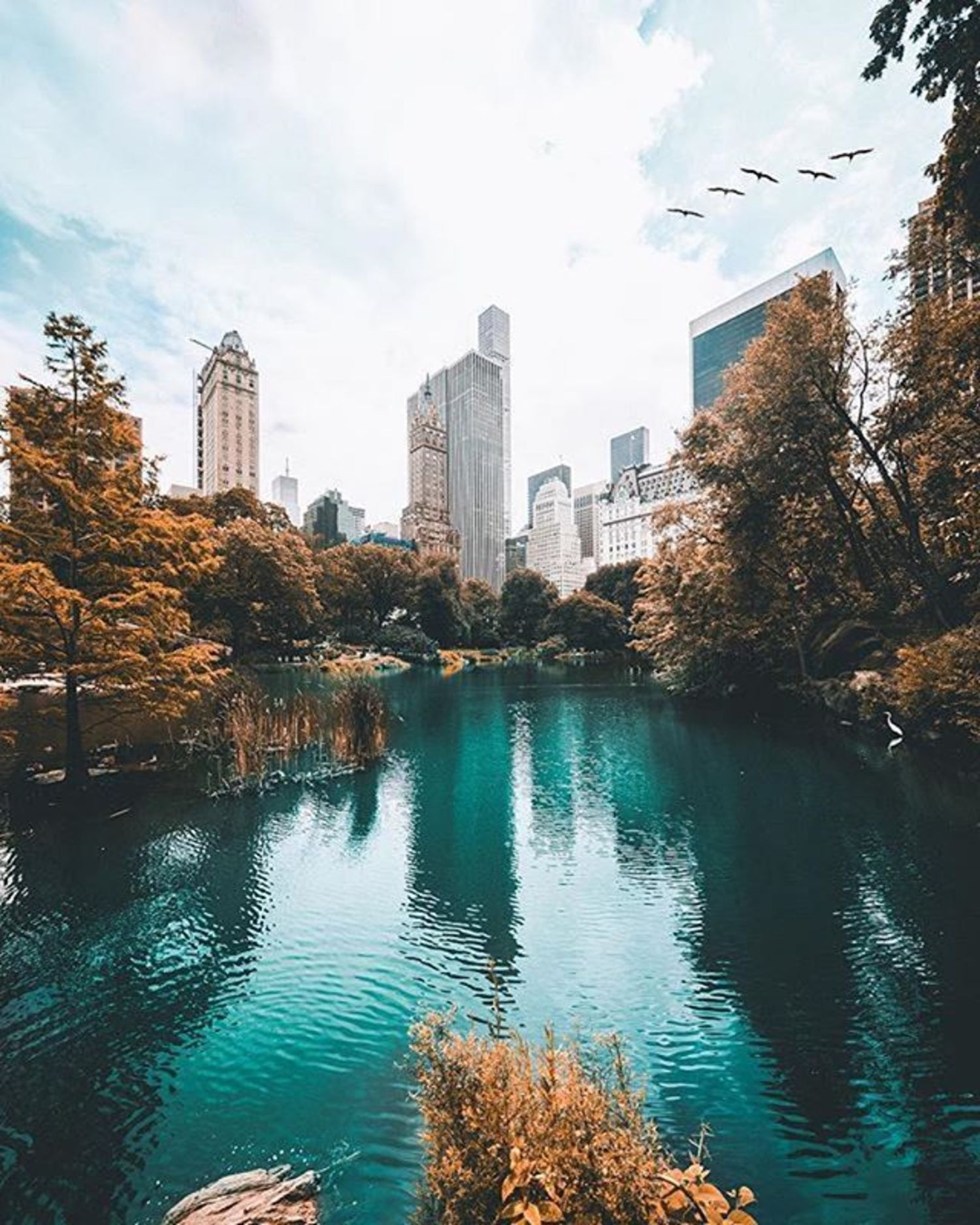 Central Park, New York. Photo via @206shooter #viewingnyc #newyorkcity #newyork #nyc