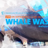 Watch the Museum's 2016 Whale Wash