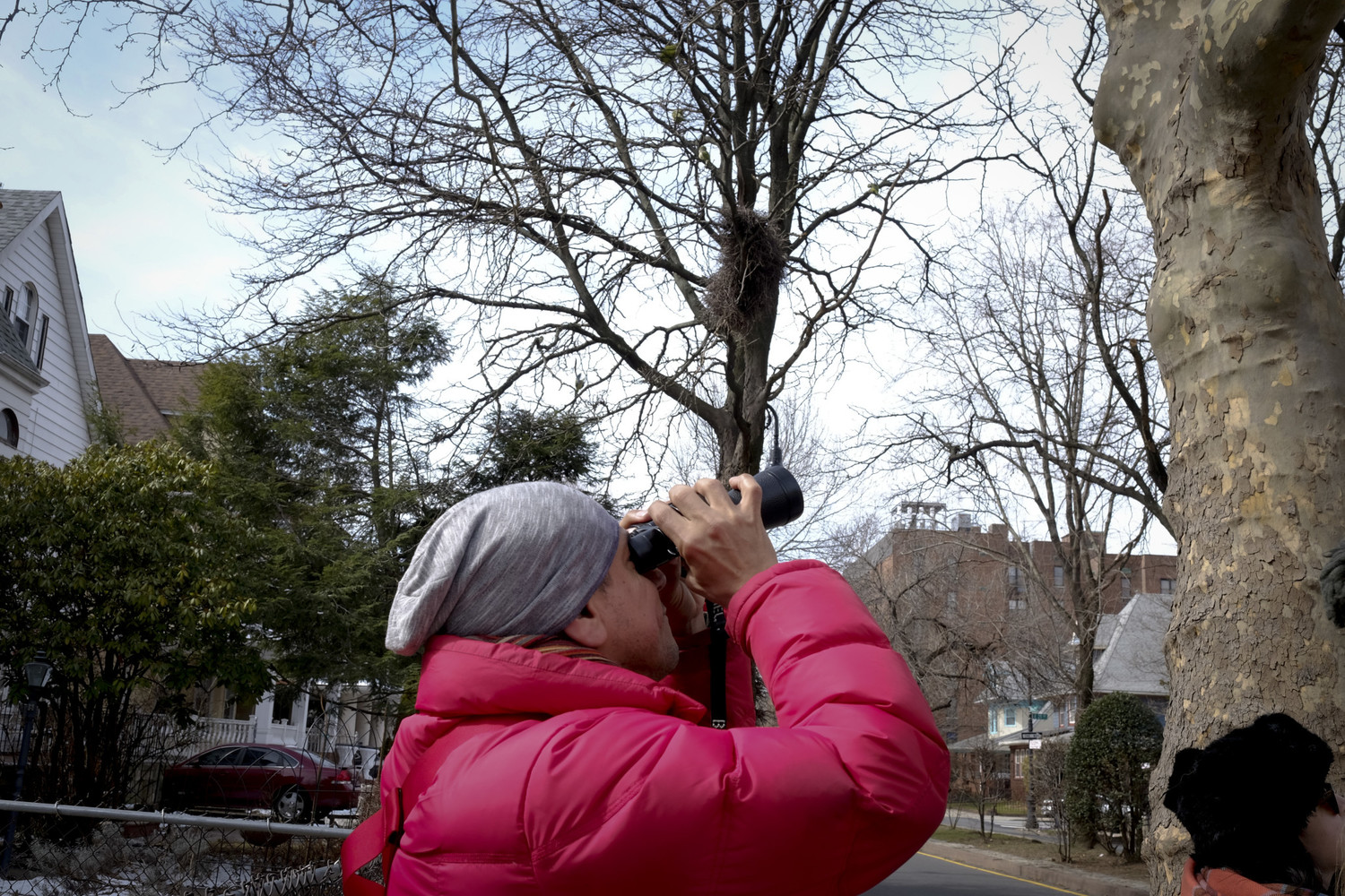 A bird watcher gets an up close look at the Brooklyn parrots with the help of binoculars on the March 5, 2016 tour.
