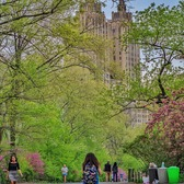 Central Park and The San Remo, New York, New York