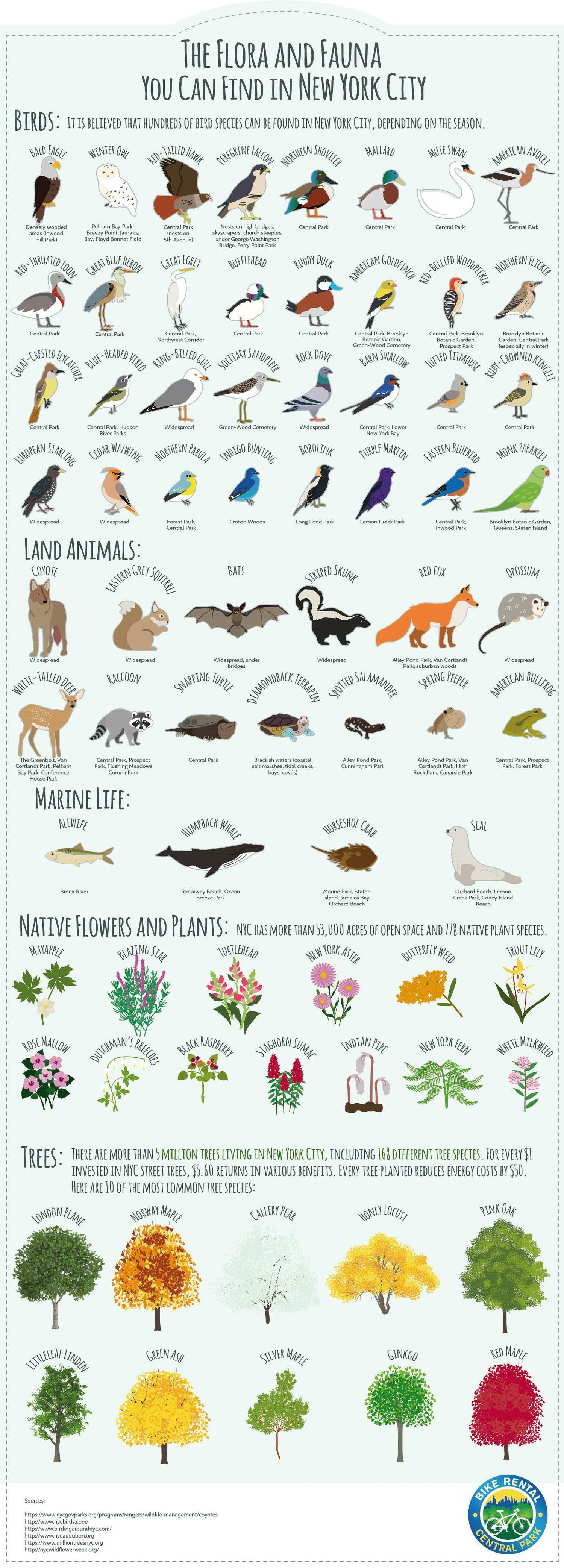 The Flora and Fauna You Can Find in New York City