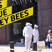 Capturing Sudden Swarms of NYC Bees To Make Honey
