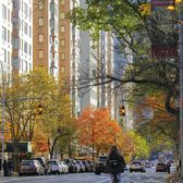 5th Avenue, Upper East Side, Manhattan