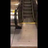 Subway Rat's Cardio Workout Ends Badly