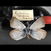 Nabokov's Butterflies - Shelf Life 360