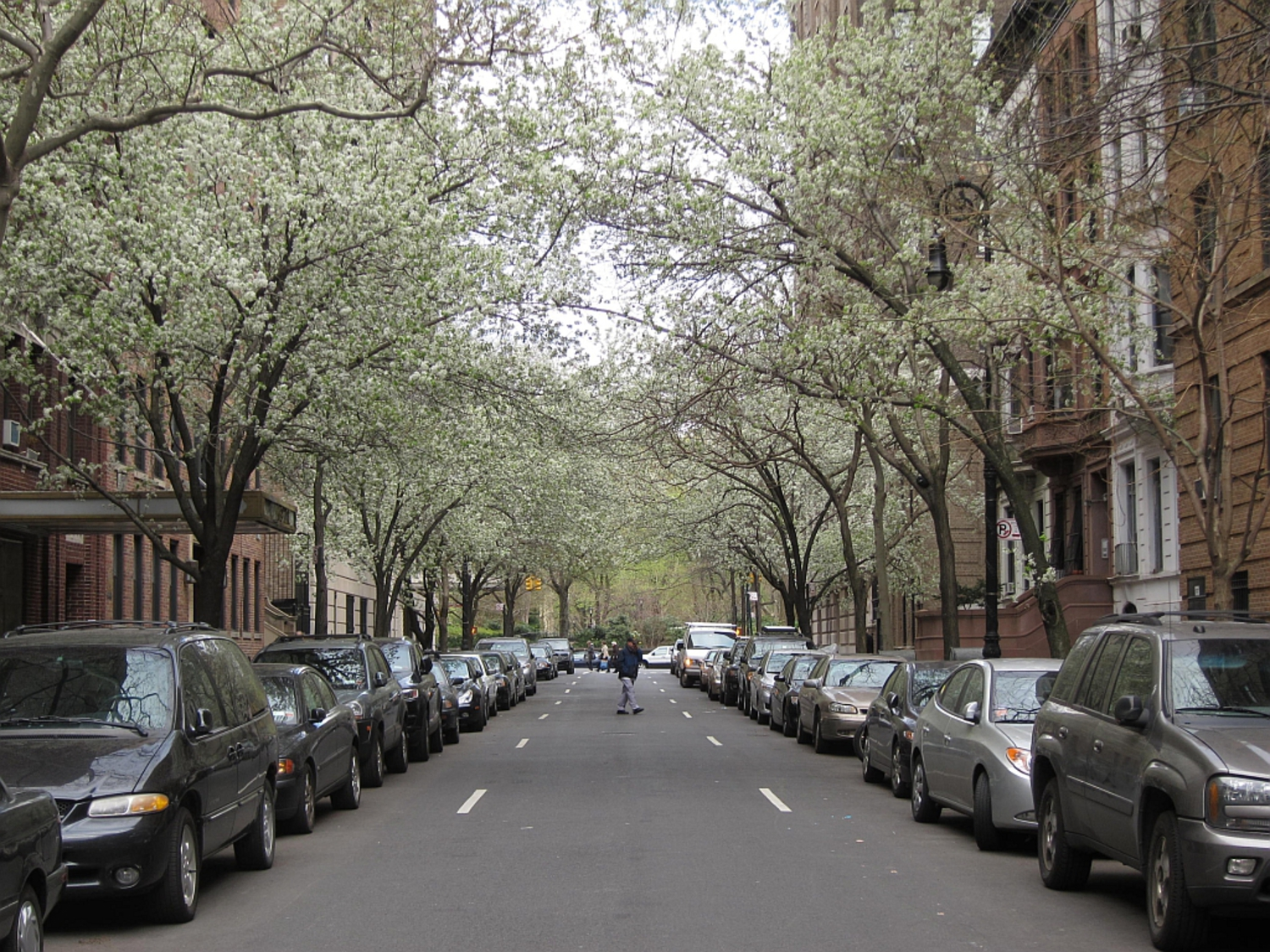 "The old Upper West Side 17 | Callery pear trees blooming on West 69th Street, of ""You've Got Mail"" fame."