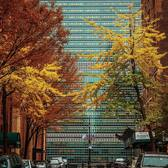Tudor City's East 43rd street fall foliage (if there is such a thing) coloring the way to the United Nations Secretariat building ✰ #NYC #NY #newyorkcity #newyork #new_york #manhattan #wildnewyork #EmpireStateOfMind #topnewyorkphoto #thisisnewyorkcity #nycprimeshot #made_in_ny #ig_nycity #igersofnyc #gf_nyc #icapture_nyc #instagramnyc #ILoveNY #newyorker #newyorknewyork #igersusa #newyork_instagram #supremenewyork #ig_northamerica #ig_unitedstates #instaglobal #igersmood #seeyourcity #rsa_streetview #streetphoto