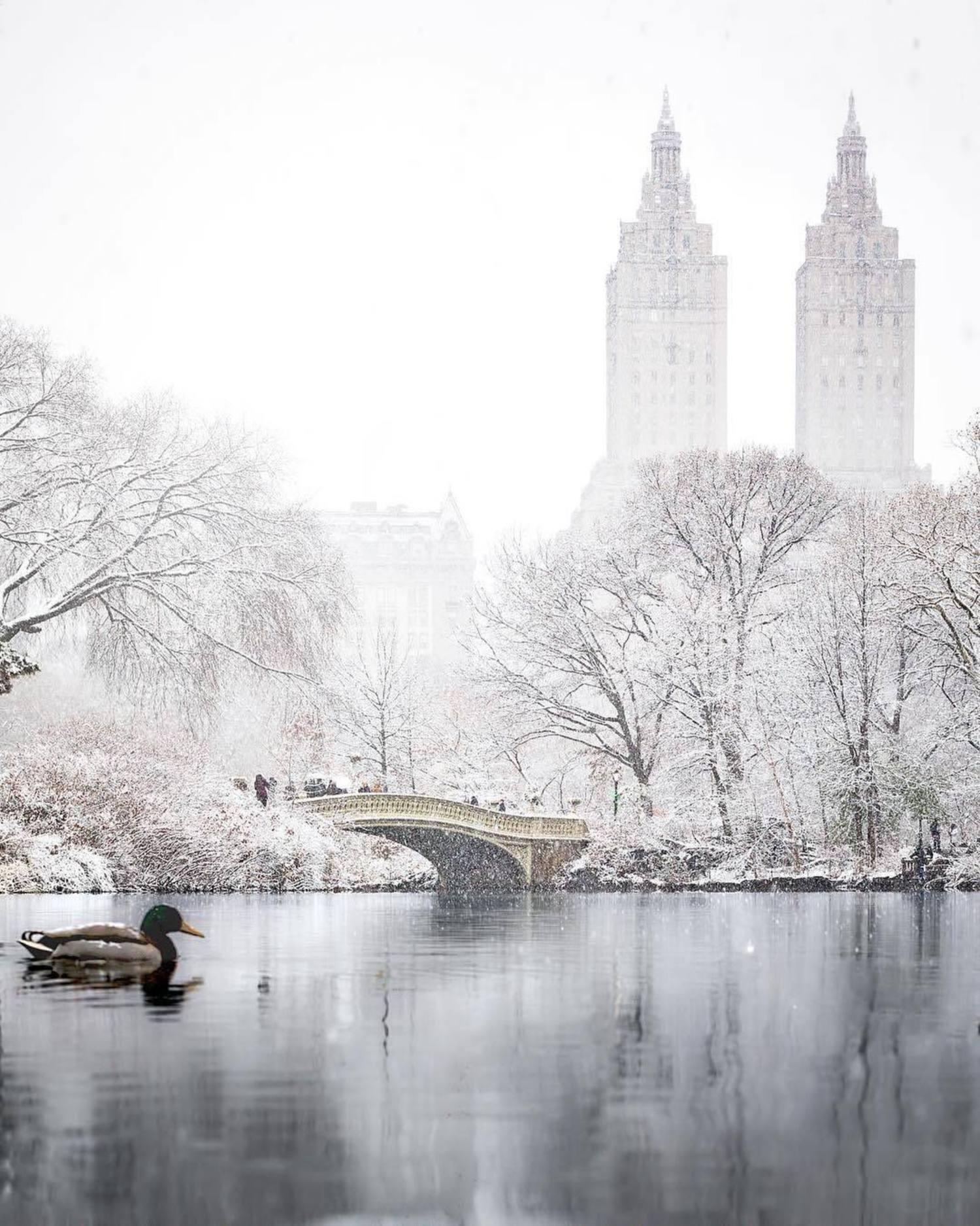 The Lake, Central Park, Manhattan. Photo via @beholdingeye #viewingnyc #nyc #newyork #newyorkcity #centralpark