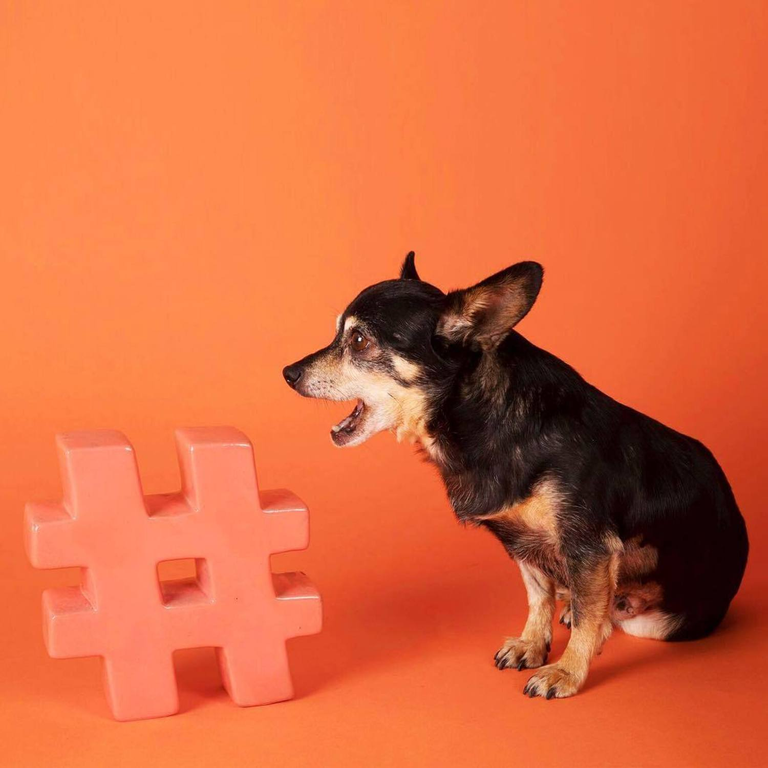 Have a four-legged BFF? Don't forget to hashtag #humansbf for a chance to be feature on our insta story! 🐾