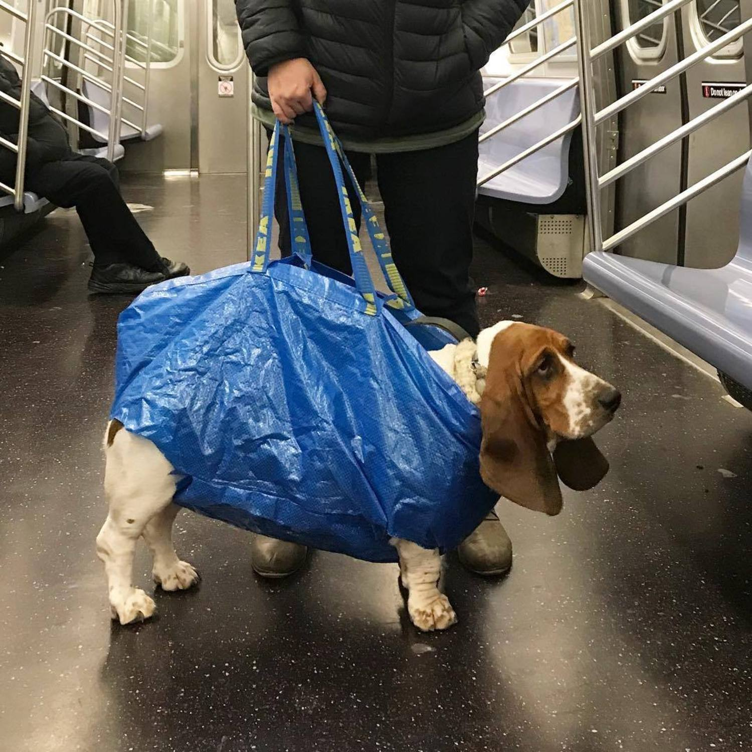 #tbt to my first time in an Ikea bag.