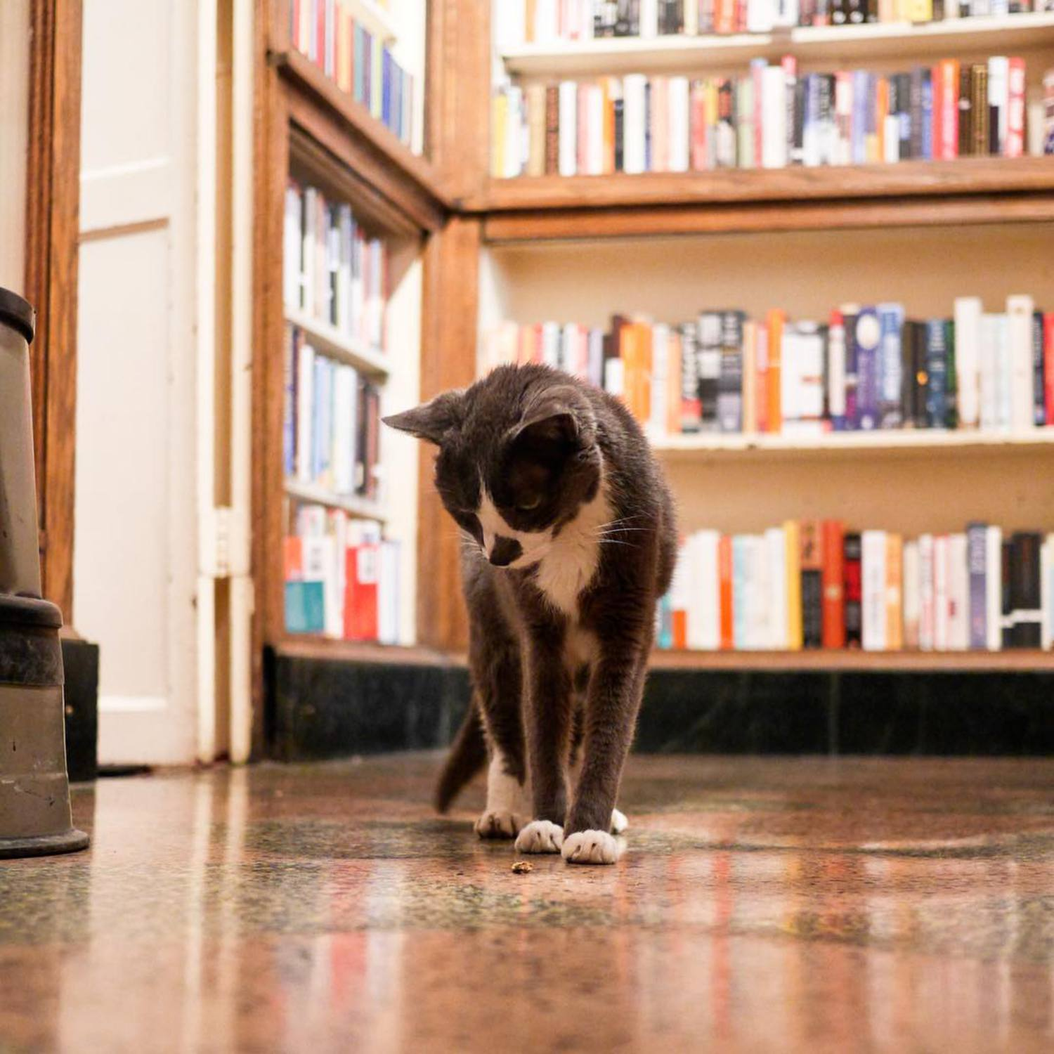 """I understand the offering, but to assume that I'm going to start answering your questions just because you put a treat in front of me is a bit naive. If you want me to warm up to you, I suggest you completely ignore me."" - Hampton, Upper East Side (The Corner Book Store)"