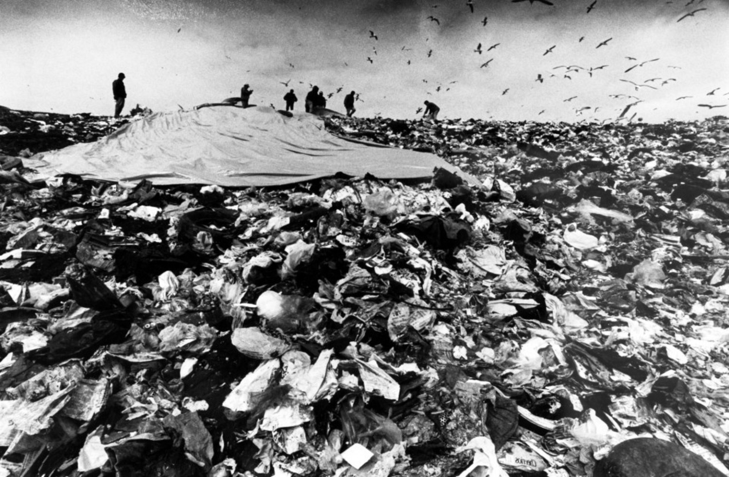 Fresh Kills Landfill. Circa 1993.