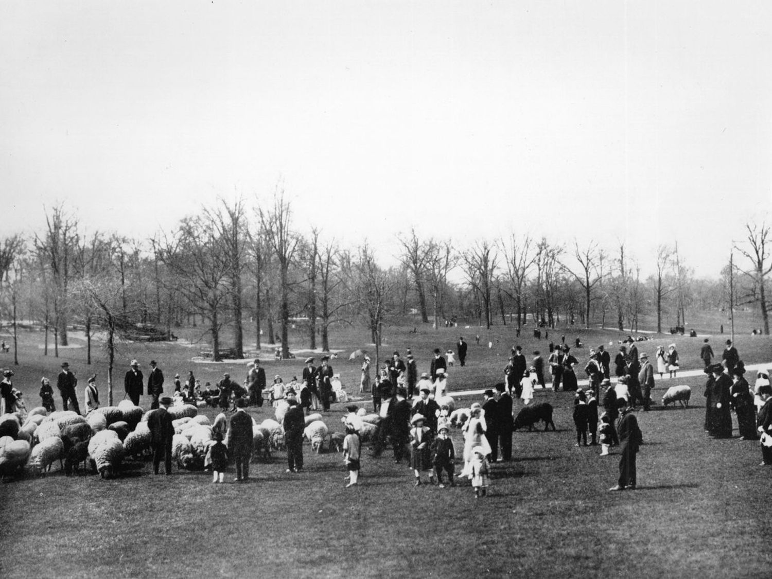 Sheep and admirers on the Long Meadow, Prospect Park, circa 1895.