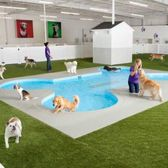 28 JFK airport | JFK airport's new all-animal terminal is ahead of the pack The dog and pony show is headed to New York's John F Kennedy Airport. When a new terminal called The Ark opens opens next year, 178,000 square feet of posh amenities will include everything from a resort with suites that have large flat-screen TVs, to climate-controlled stalls, showers, massages, a private space especially set aside for penguin mating, a paw-shaped dog swimming pool, a jungle for cats made of live trees that will give them a tantalizing view of the aquarium, and stables full of the finest hay a horse could hope for. Ok, clearly this terminal isn't for humans -- it's for our pets, livestock, birds and other animals that make their way through JFK.