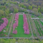 Above New York: Cherry Blossoms at Brooklyn Botanic Garden
