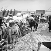 Snow carts at the river after a blizzard, New York, 1899.