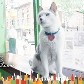 This Cat Runs A Real Estate Office In Brooklyn | The Dodo City Pets
