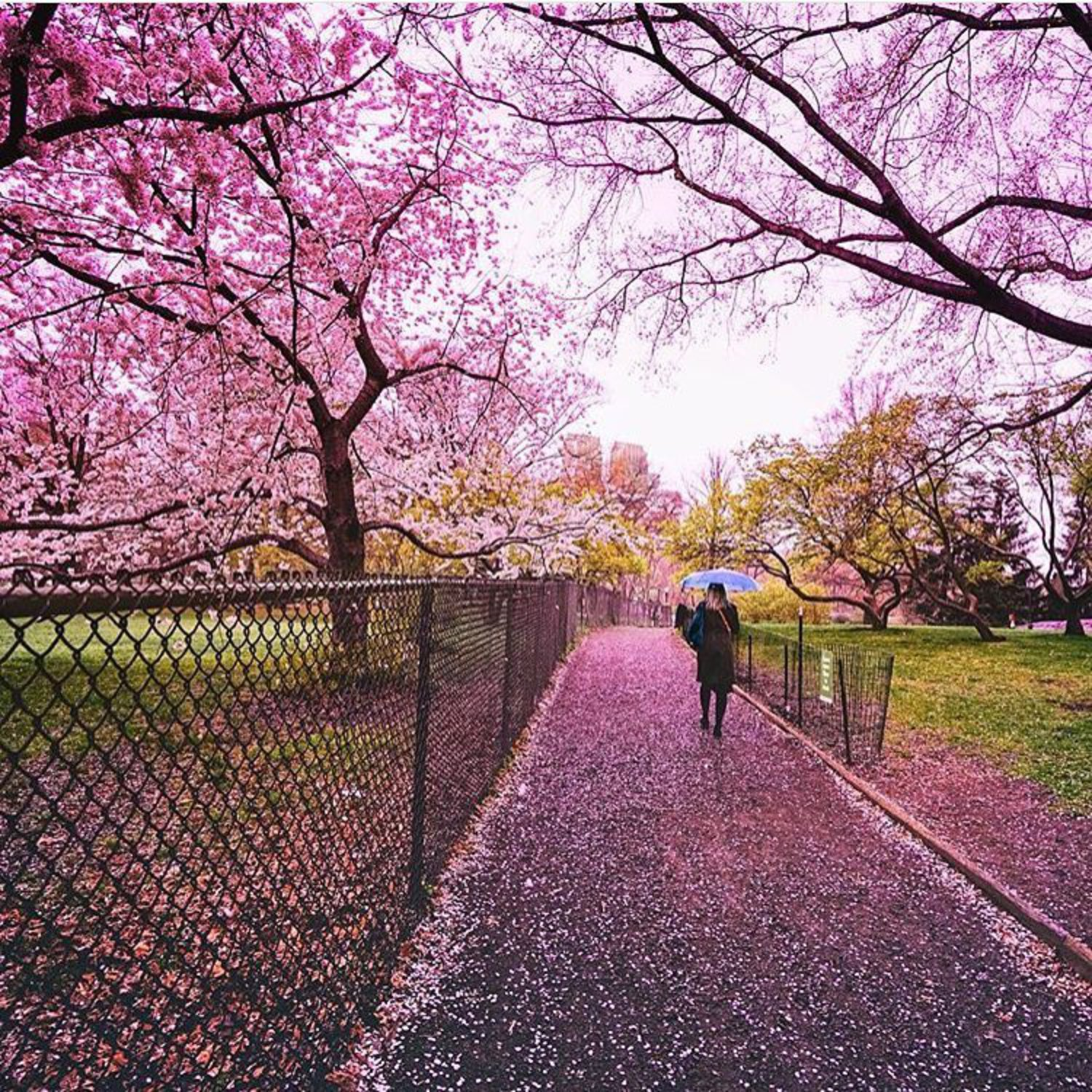 Oh @travelinglens  how I love your feed! 😍 spring is definitely here 🌸🌸🌸 #newyorkster
