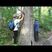Woodhaven's Memorial Trees