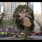 Putting up the Rockefeller Christmas Tree 🎄 | Curbed