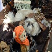 Tompkins Square Dog Halloween Parade 2014