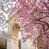 Washington Square Arch, Manhattan. Photo via @rtanphoto #viewingnyc #nyc #newyork #newyorkcity #washingtonsquarepark