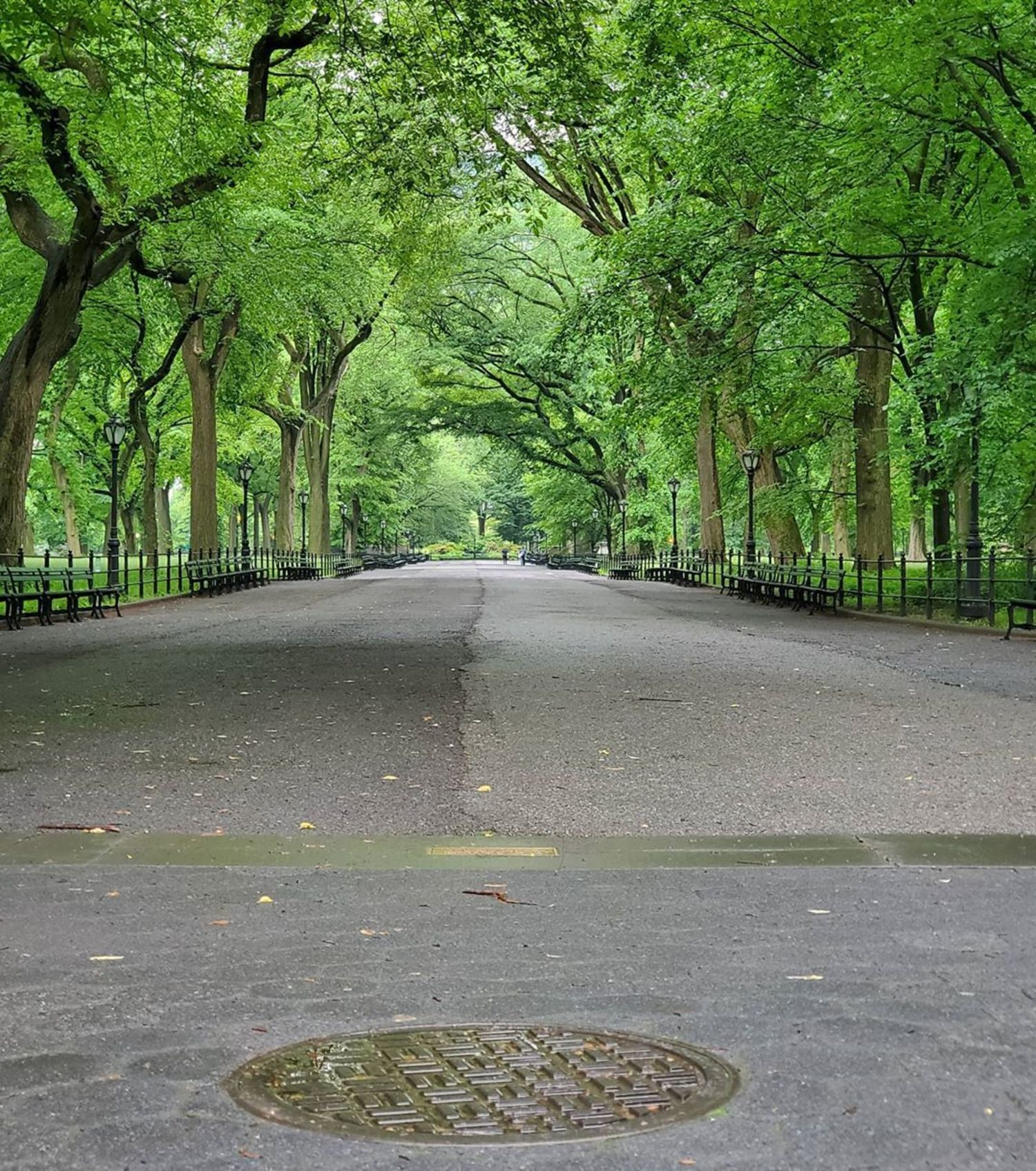 The Mall in Central Park, Manhattan