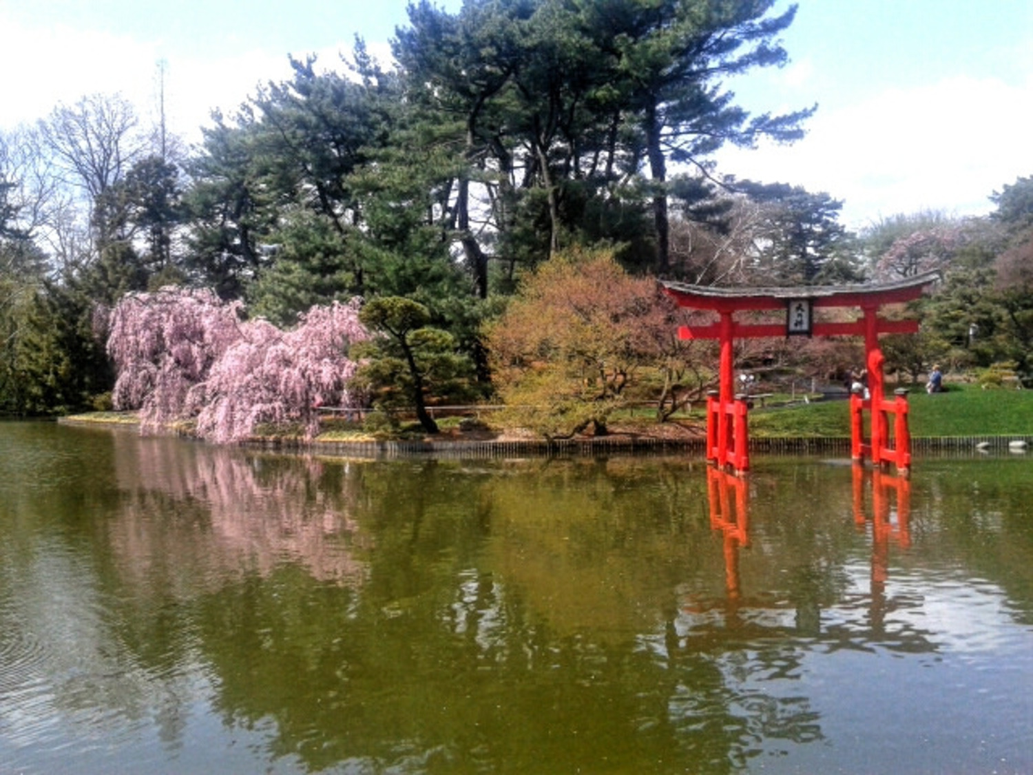 """Cherry clouds 