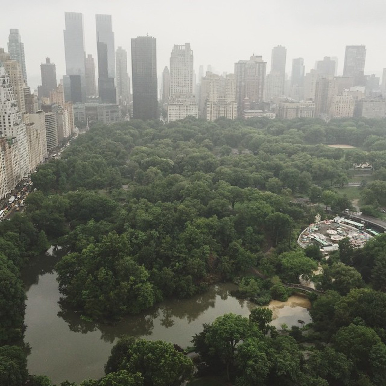 New York Jungle  Seen from @thepierreny