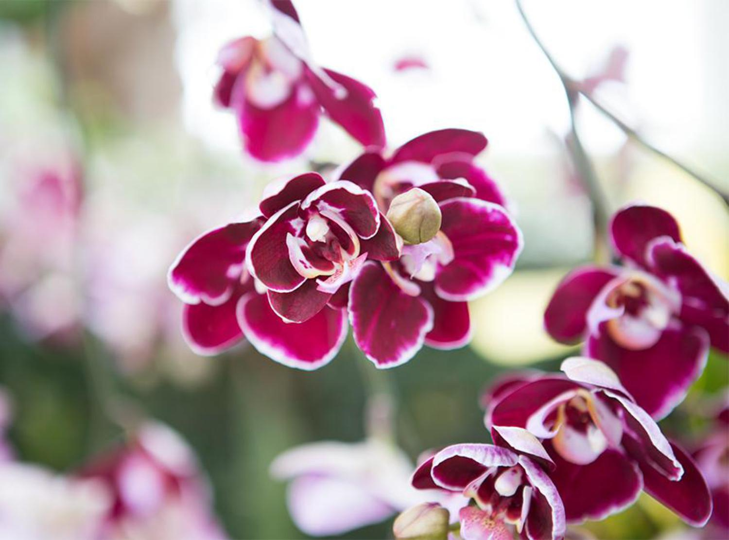 Orchids are found all over the world and in all different cultures, from Japanese to Chinese to Greek.