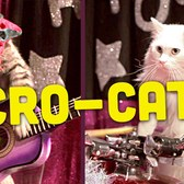 This Lady Started A Cat Circus And It's As Crazy As It Sounds