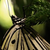 Tropical Butterflies Alive in New York