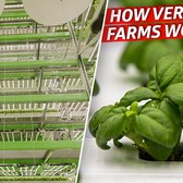How a Vertical Farming Company Grows 80,000 Pounds of Produce per Week — Dan Does