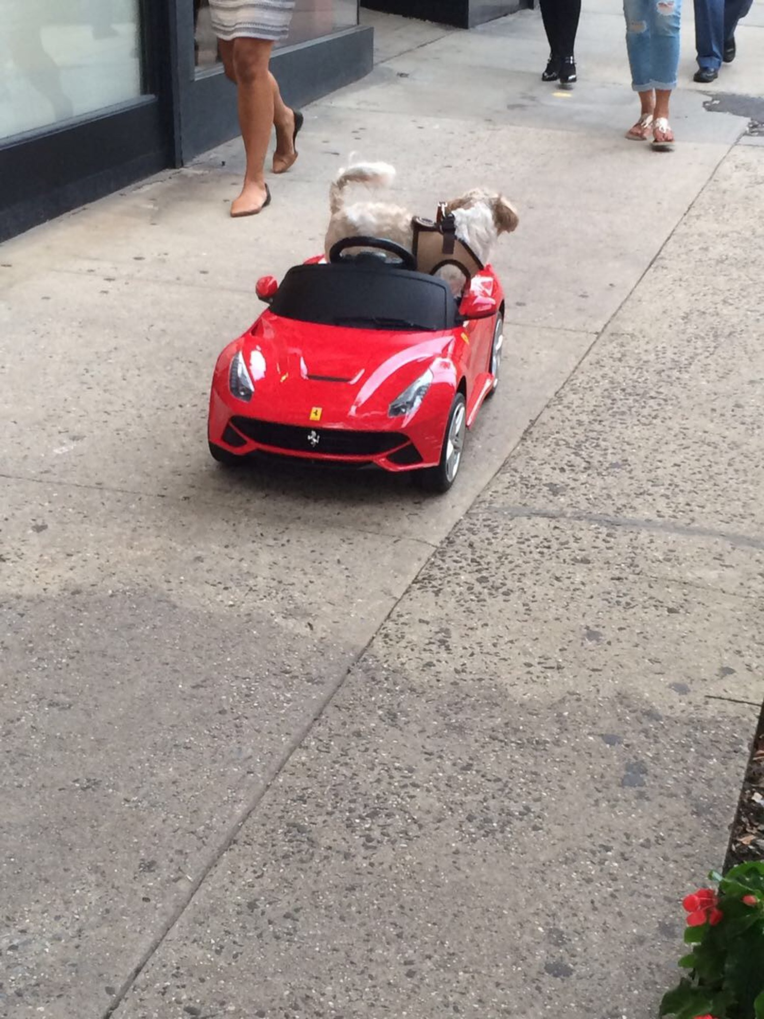 "Seen on Madison Ave & 80th - Owner was driving ""Louie V"" via remote control"