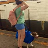 You can't bring your dog on the subway in New York unless it fits in a bag...