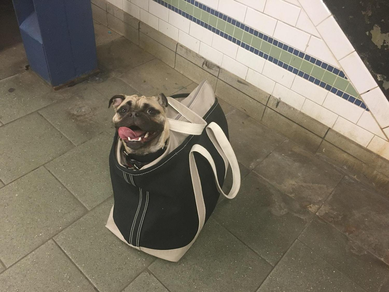 Subway Pug