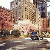 Murray Hill, Manhattan, New York City