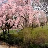 ⁴ᴷ⁶⁰ Walking NYC : Fort Tryon Park, The Cloisters, Fort Washington Avenue & Broadway