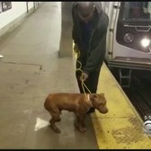Dog Survives Ordeal On 'L' Subway Line Tracks In Brooklyn